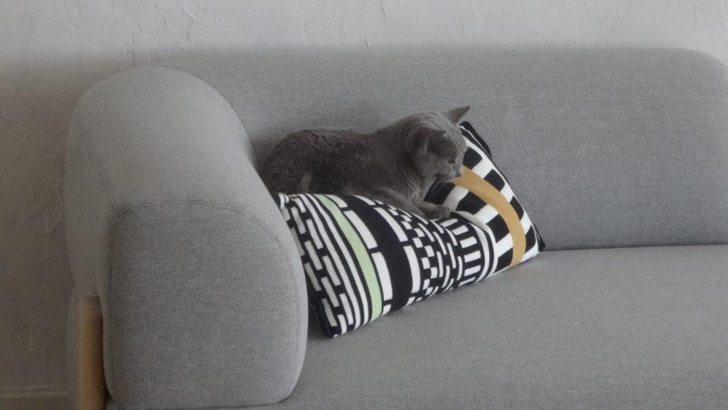 ソファーの上で退屈そうにするデイジー