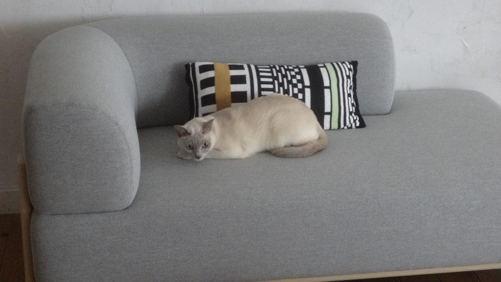 ソファーの上でフリーズする楓