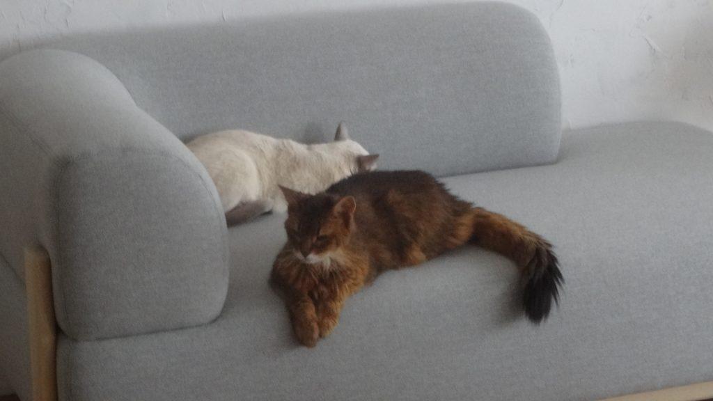 ソファの上のローズと楓
