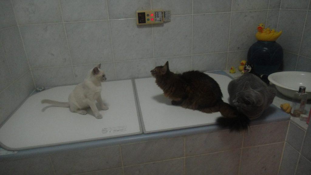 風呂場での珍しいスリーショット写真