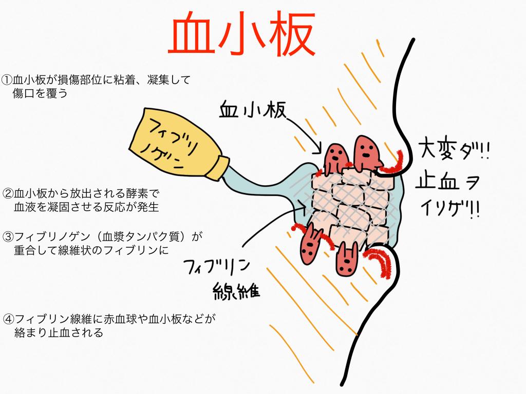 血小板の働きを示すイラスト