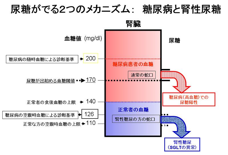 尿糖がでる機序について説明した図