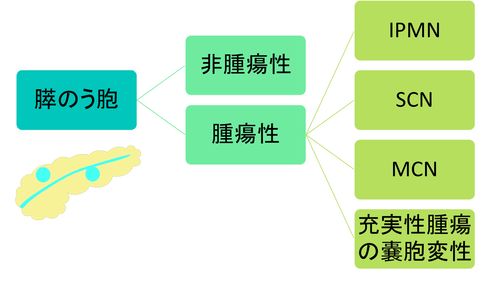 膵のう胞の分類図