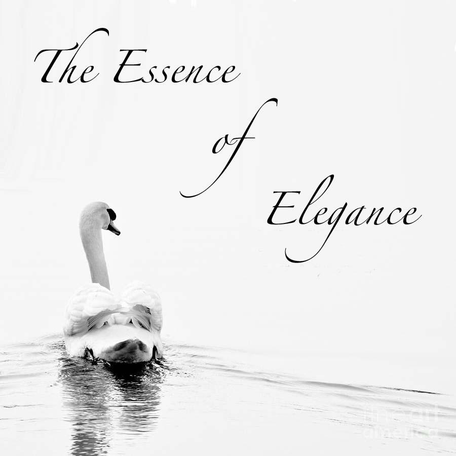 エレガンスのエッセンス と書かれた白鳥が優雅に水面を行く姿の写真