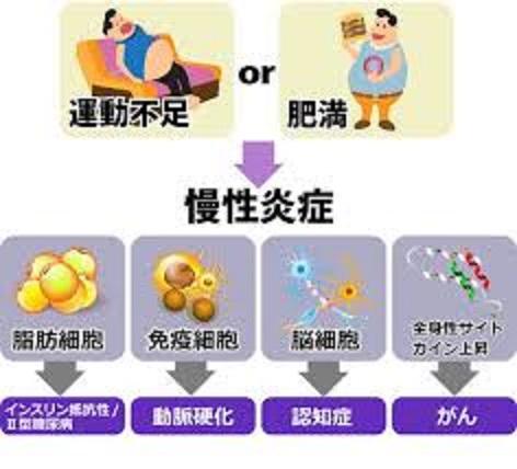 悪い生活習慣により生じる運動不足 肥満が慢性炎症を起こすことを示す図