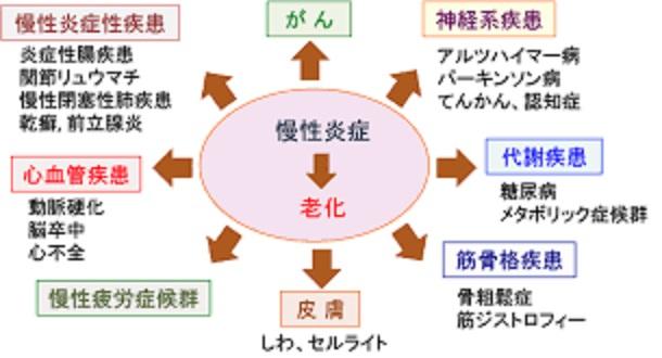 老化と慢性炎症の関連を示す図