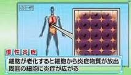 老化細胞が出す因子と慢性炎症の関連を示す図