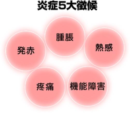 炎症の4兆候を示す図