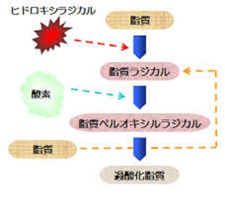 過酸化脂質が作られる過程を示す図