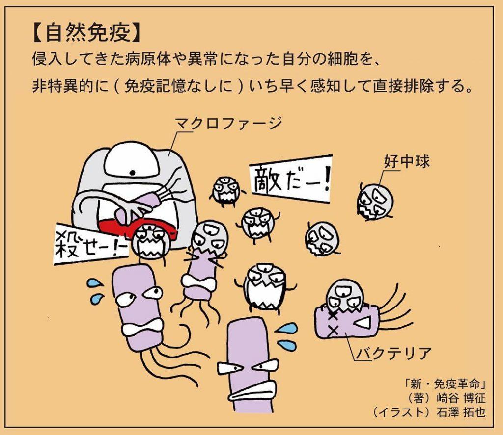 体内因子により慢性炎症が生じる機序