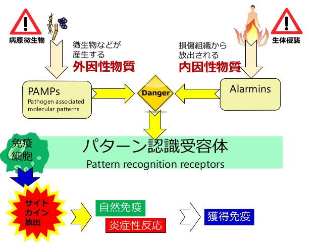 アラーミンについて説明した図