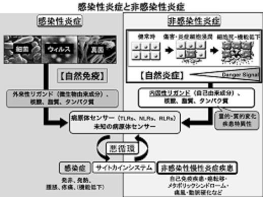 自然炎症により慢性炎症が生じることを説明した図