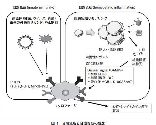 自然炎症について説明した図