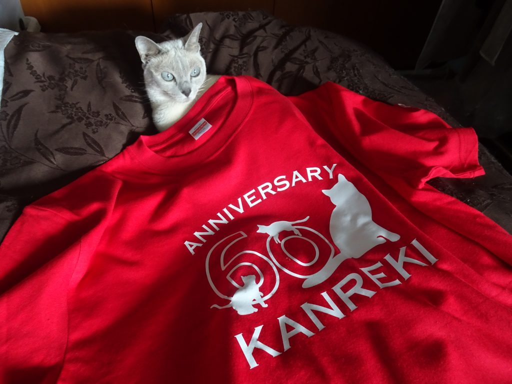 Tシャツを着る楓