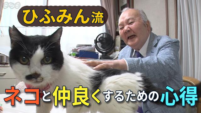ひふみんのニャンぶらりの宣伝画面