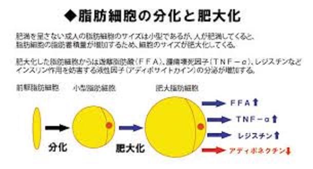 脂肪組織の慢性炎症によるアデイポカイン産生バランスの変化を示す図