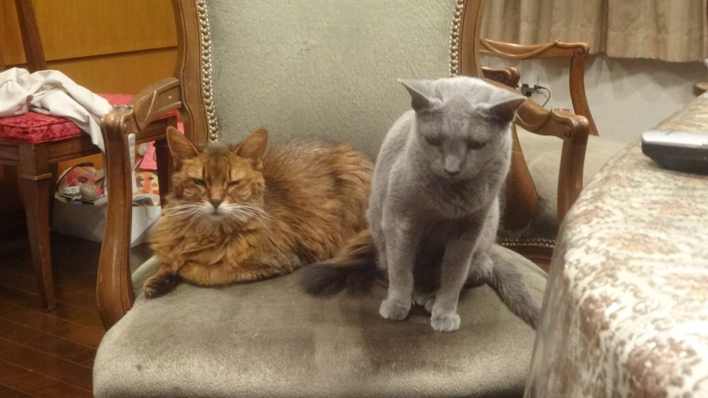 同じイスに座るローズとデイジー