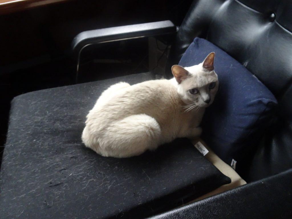 書き手の部屋の勉強机のイスに座る楓