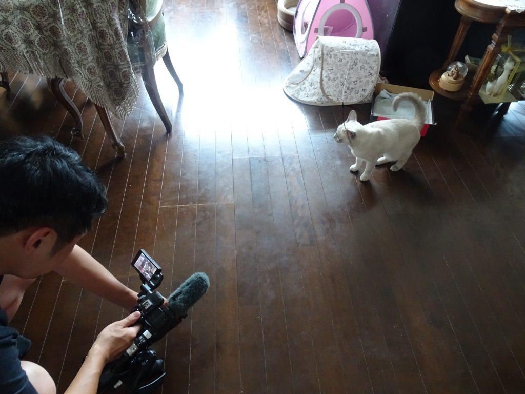 楓を撮影するスタッフさん