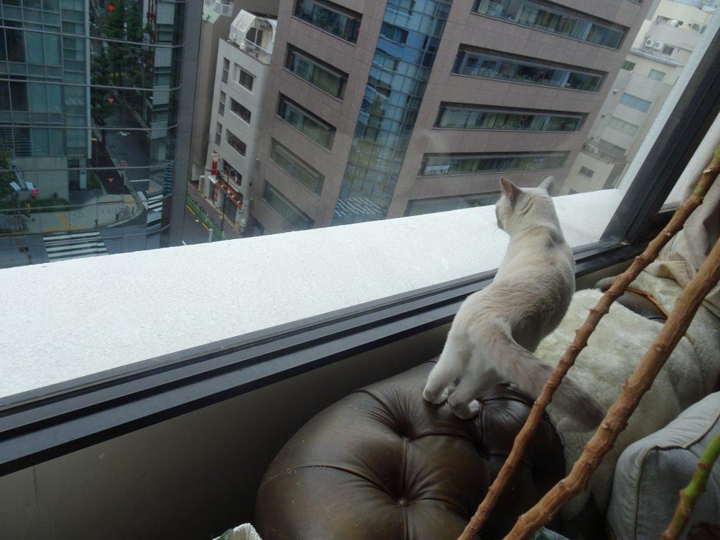 窓際から下を覗いている楓