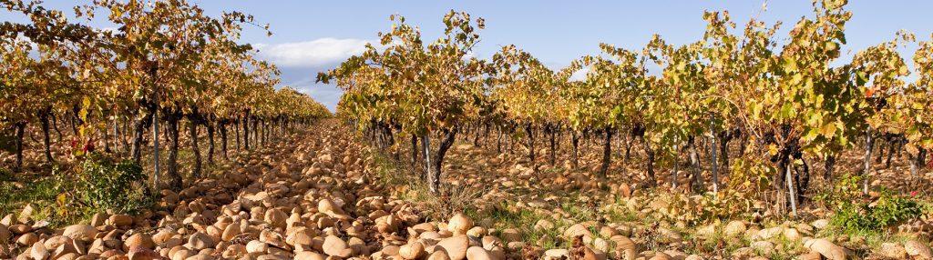 ブルゴーニュの有名なブドウ畑の写真