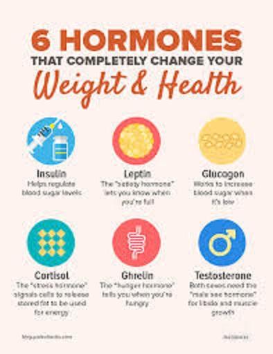 摂取カロリー量 食欲を規定するホルモンの説明図