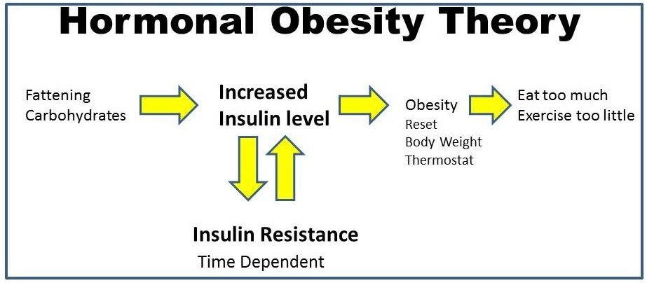 インスリン抵抗性と肥満の関係を説明する図
