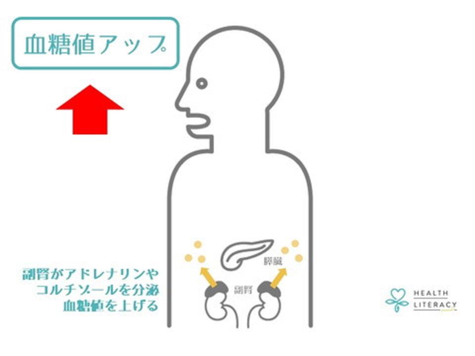 コルチゾールは肥満ホルモンとしての性格も有することを説明する図