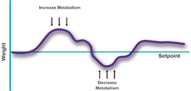ホメオスタシスシステムにより体重が維持されることを示す図
