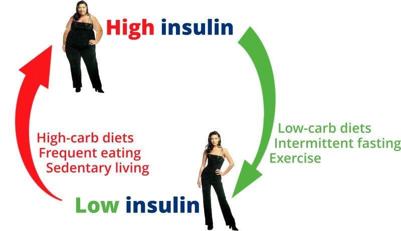 インスリン分泌の制御により肥満が改善できることを示す図
