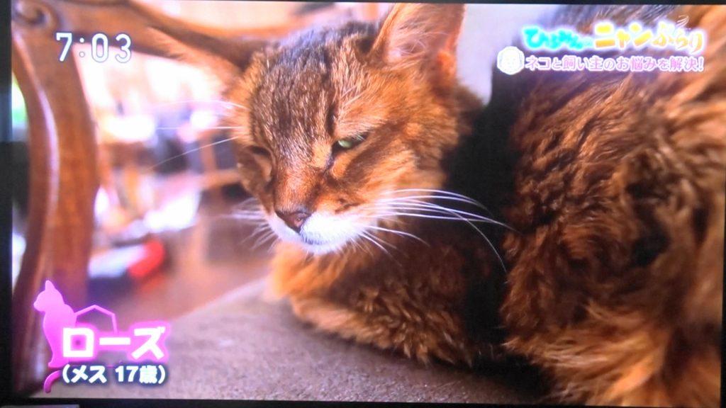 番組で「17歳のおばあちゃんネコ」と紹介されたローズ