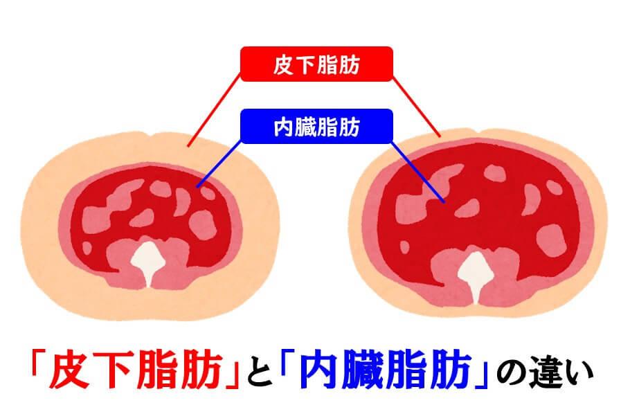 内臓脂肪と皮下脂肪の差異を示す図