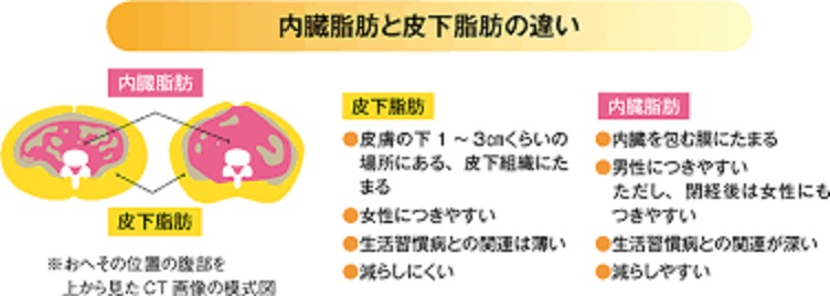 日本人の体質を考えたダイエット2:内臓脂肪を減らすダイエット