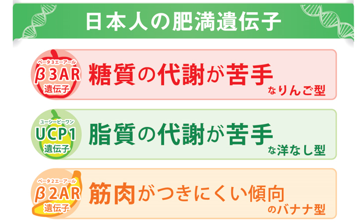 日本人の肥満遺伝子の特徴を示す表
