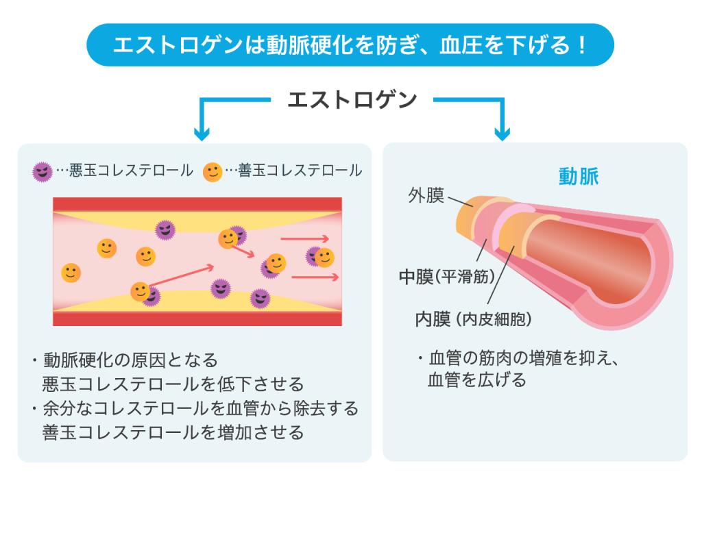 エストロゲンが動脈硬化から守ることを示す図