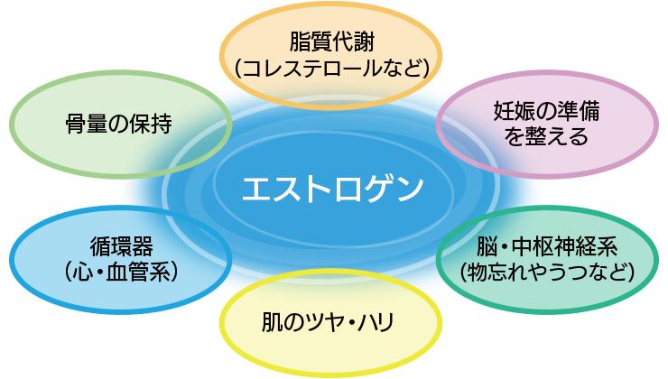 エストロゲンのさまざまな作用を示す図
