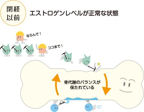 閉経前の骨代謝の状態を示す図