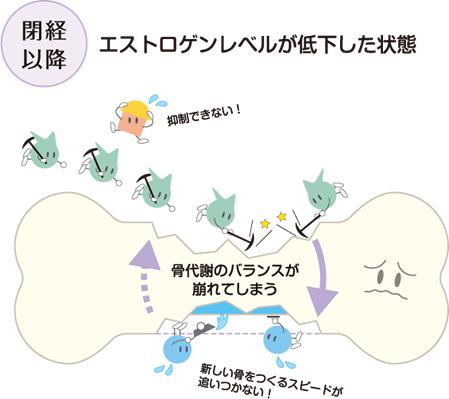 閉経後の骨代謝の状態を示す図