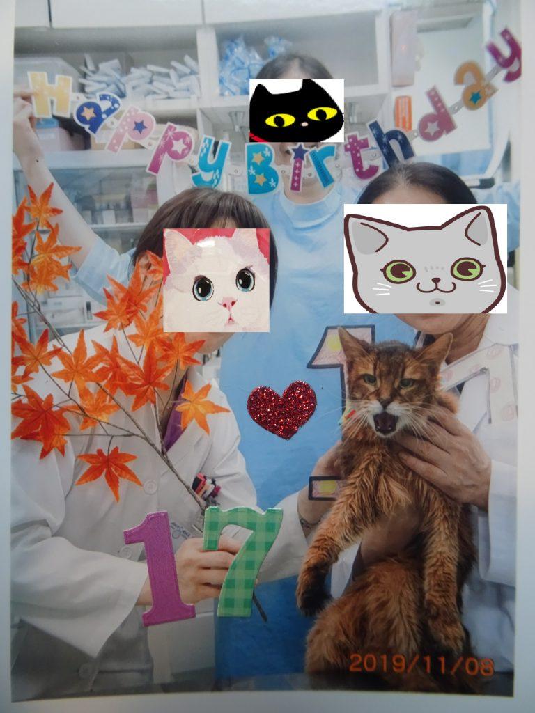 動物病院のスタッフに誕生日を祝ってもらうローズ