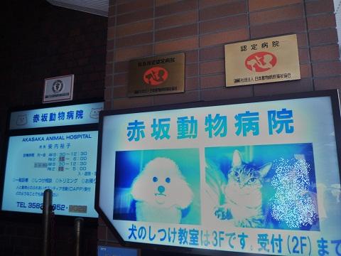 動物病院のペットのしつけ教室の看板