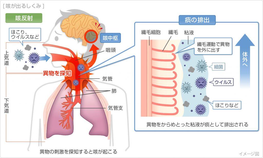 咳嗽反射による痰の排出機構について説明した図