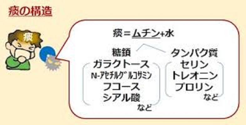 気道ムチンについて説明した図