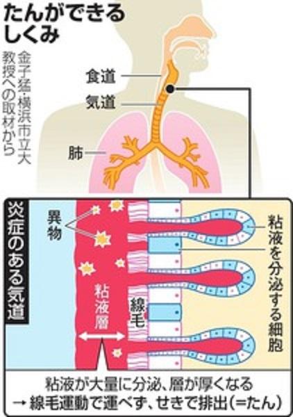 線毛運動では排出されにくくなることを説明した図