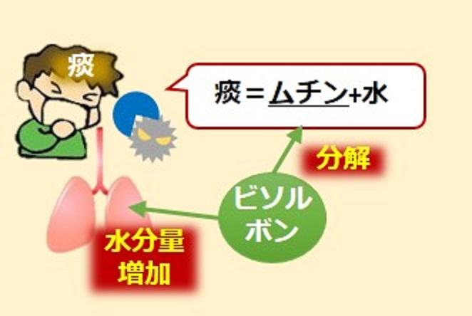 喀痰溶解薬の作用の仕方を説明した図