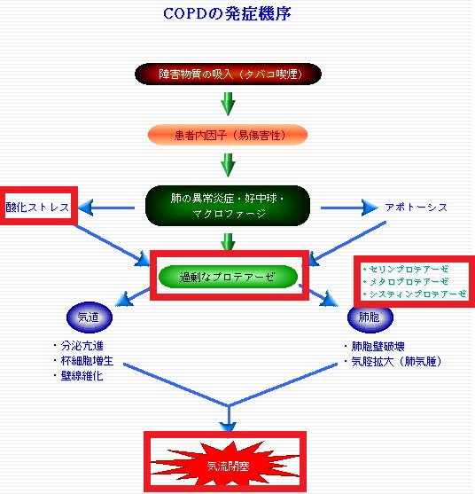 COPDの病態を説明する図