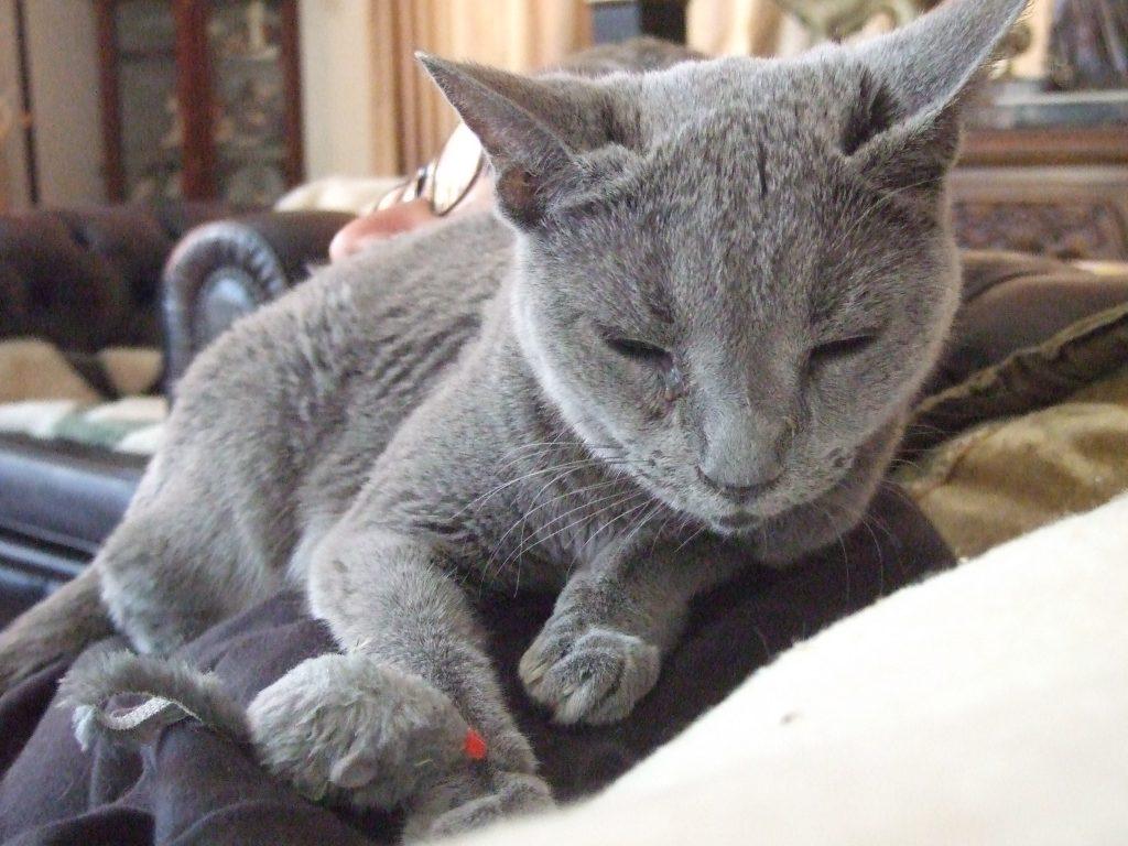 寝ているところにネズミのオモチャを突然置かれて驚くデイジー