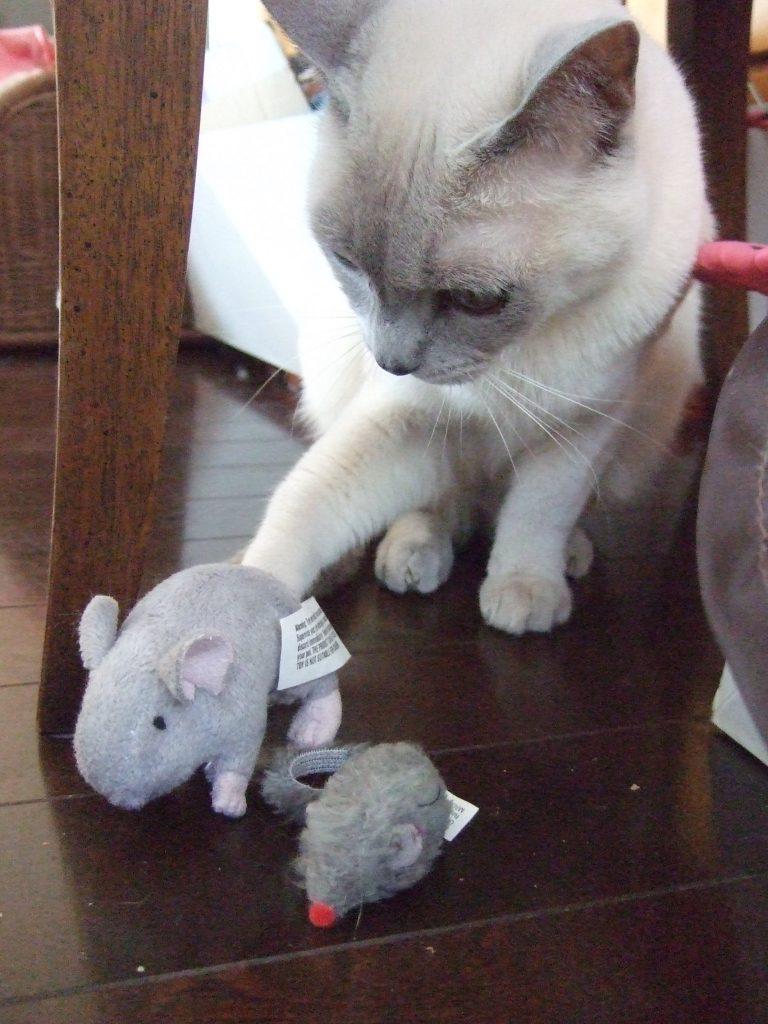 ネズミのおもちゃに右ストレートする楓