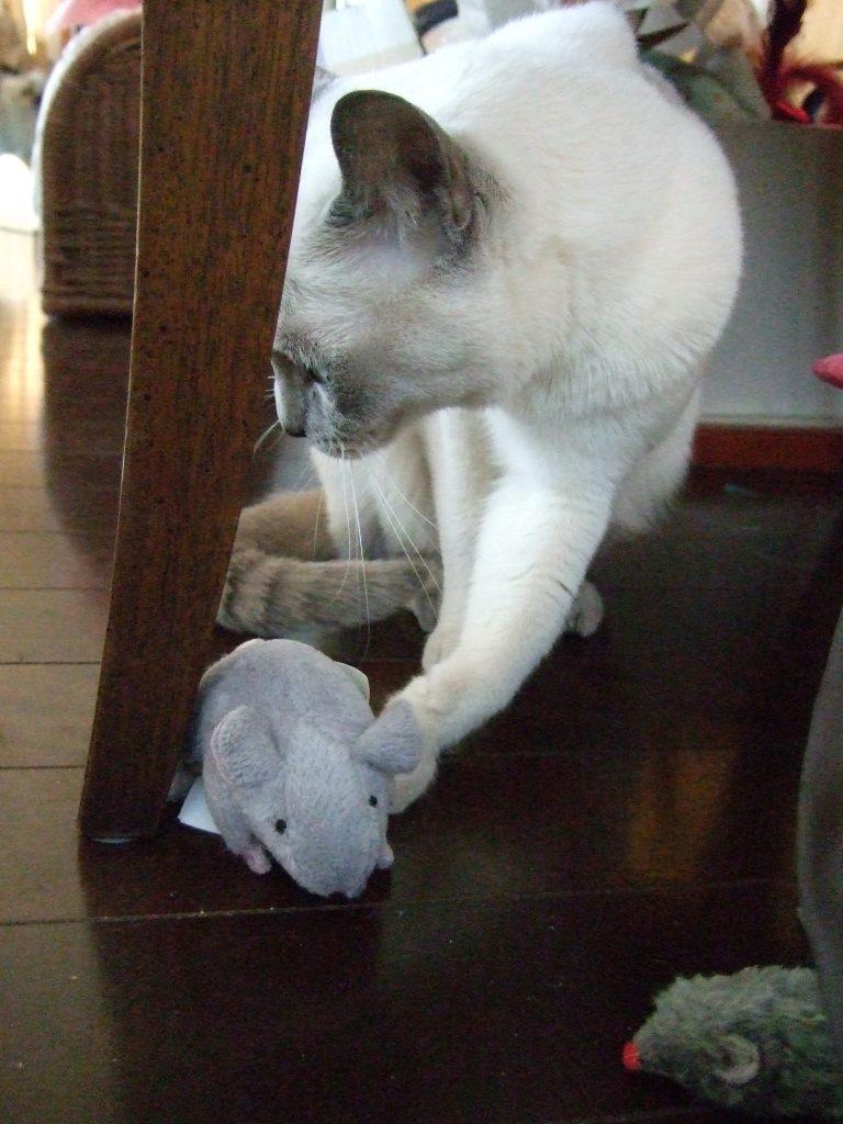 ネズミのおもちゃに左フックする楓