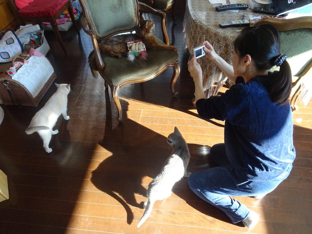 3匹のネコと糖尿病専門医さん