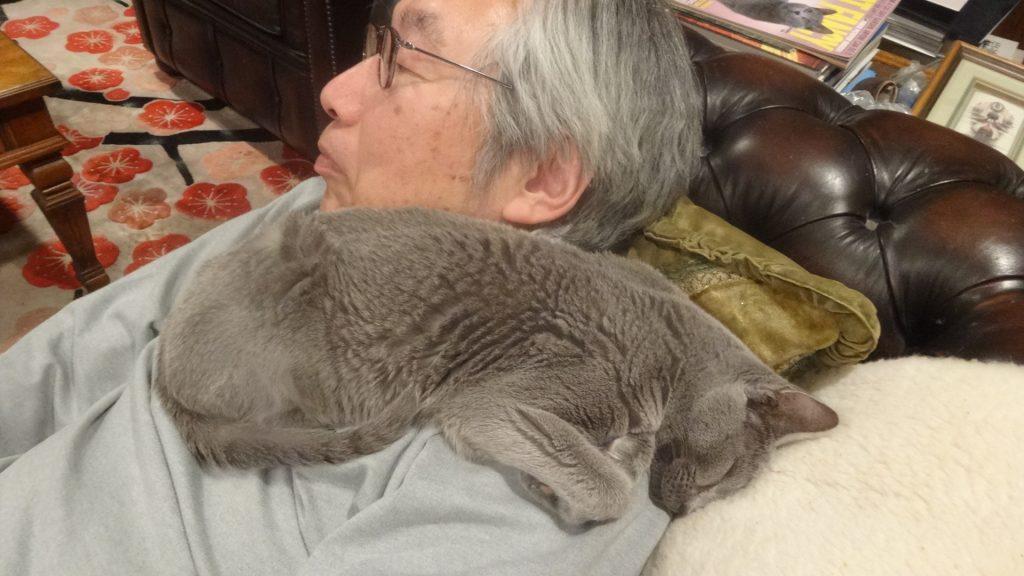 疲れて眠るデイジー